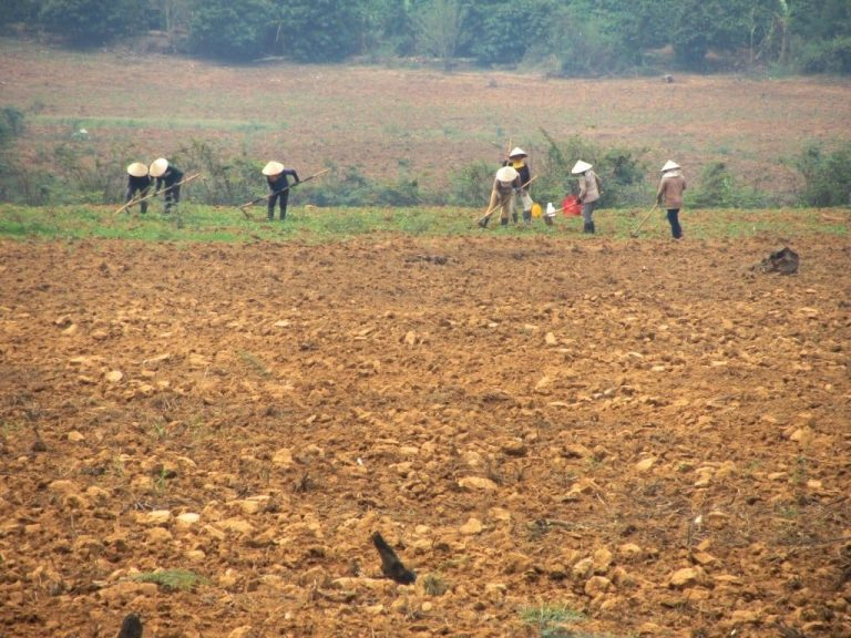 farming on the Kon Tum Plateau, where the soil is rich and the weather mild