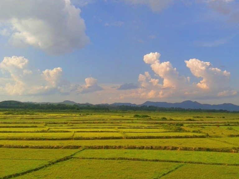 it's a wide, green and agricultural landscape around Pho Chau