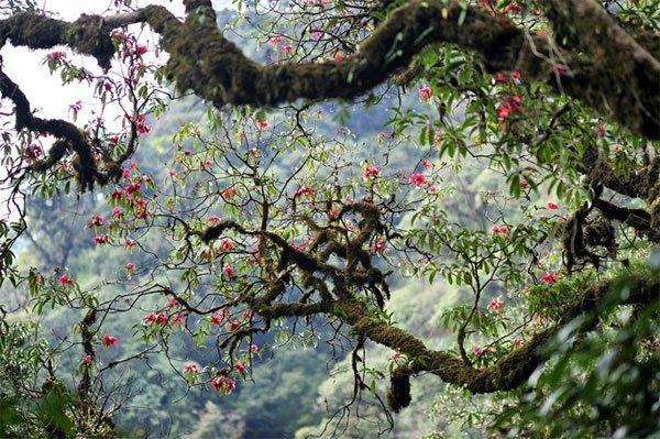 Conquering Pu Ta Leng Peak