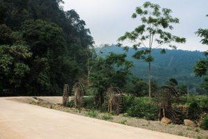 Xuân Sơn National Park Vietnam