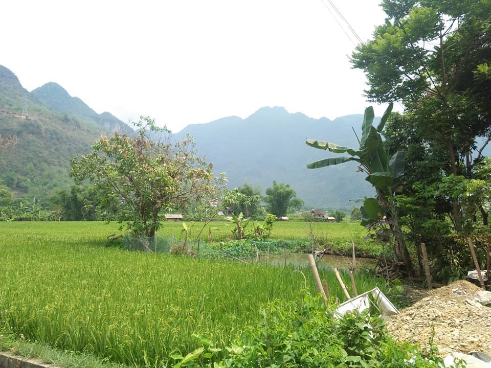 a pretty rice field in Mai Chau
