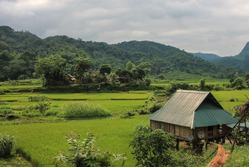 rice paddies in Pu Luong Nature Reserve