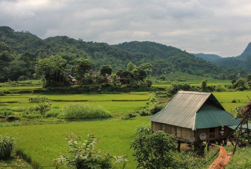 Rice Paddies Pu Luong