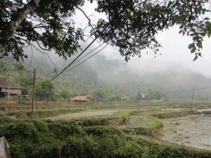 Pu Luong View Paddy