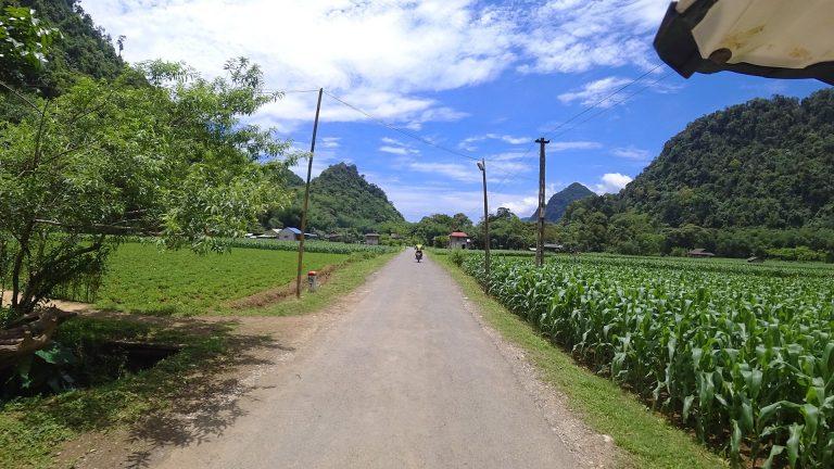 riding fast past a corn field in Mai Chau