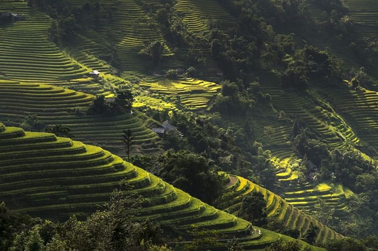 rice terraces in a Ha Giang valley