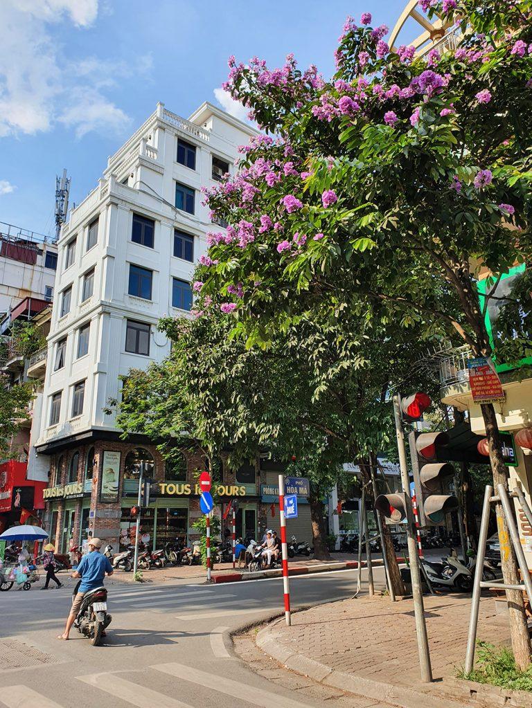 a pretty tree on the corner of Hue and Hoa Ma in Hanoi